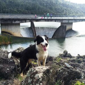 Huia Dam